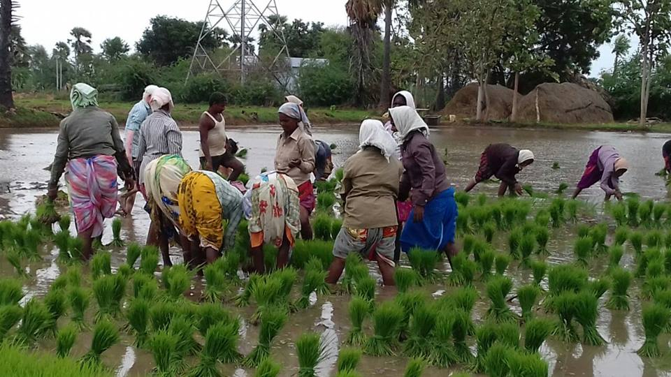 Development of Sustainable Agriculture