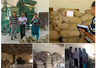 Paddy Seed Production (Rice)